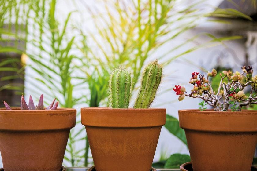 3つの鉢植え